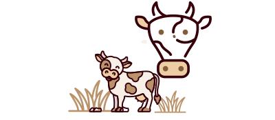 Pregnant Cow