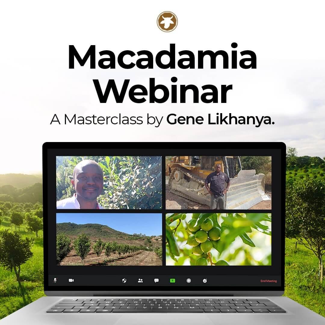 Macadamia Webinar