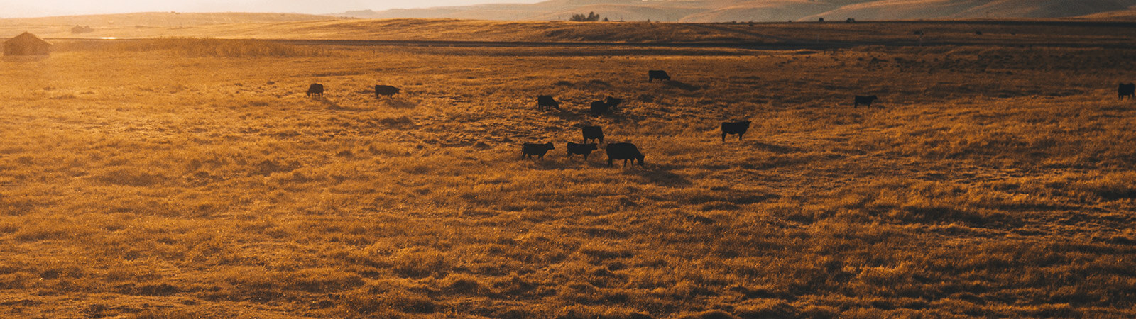 Cattle farming and Investing Webinar